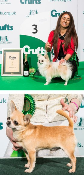 Crufts 2020 winners